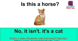 It is a cat
